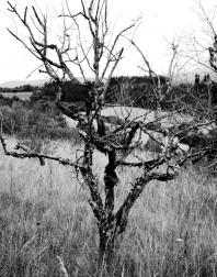 Orchard.ventoux-090722-4906