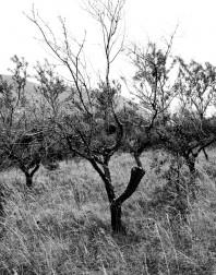 Orchard.ventoux-090722-4907