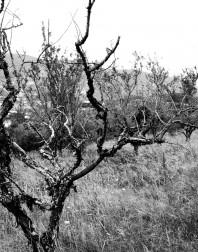 Orchard.ventoux-090722-4908