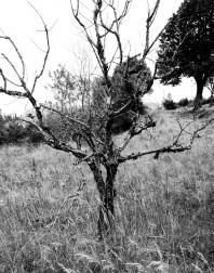 Orchard.ventoux-090722-4913