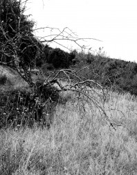 Orchard.ventoux-090722-4914