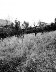 Orchard.ventoux-090722-4915
