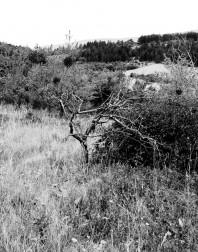 Orchard.ventoux-090722-4917