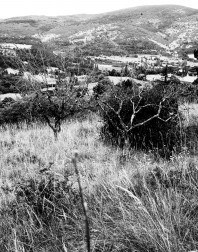 Orchard.ventoux-090722-4921