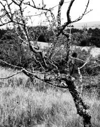 Orchard.ventoux-090722-4923