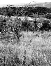 Orchard.ventoux-090722-4924