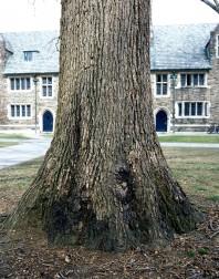 Princeton#8(150)