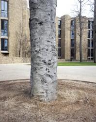Yale#11(150)