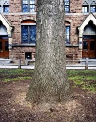 Yale#1(150)