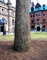 Yale#2(150)