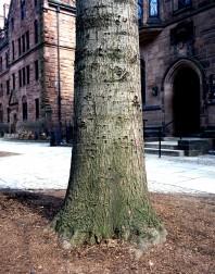 Yale#4(150)