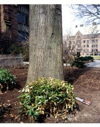 Yale#6(150)
